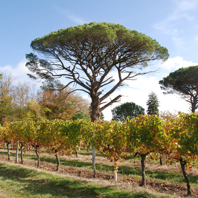 Chateau de HARTES - Les vignes